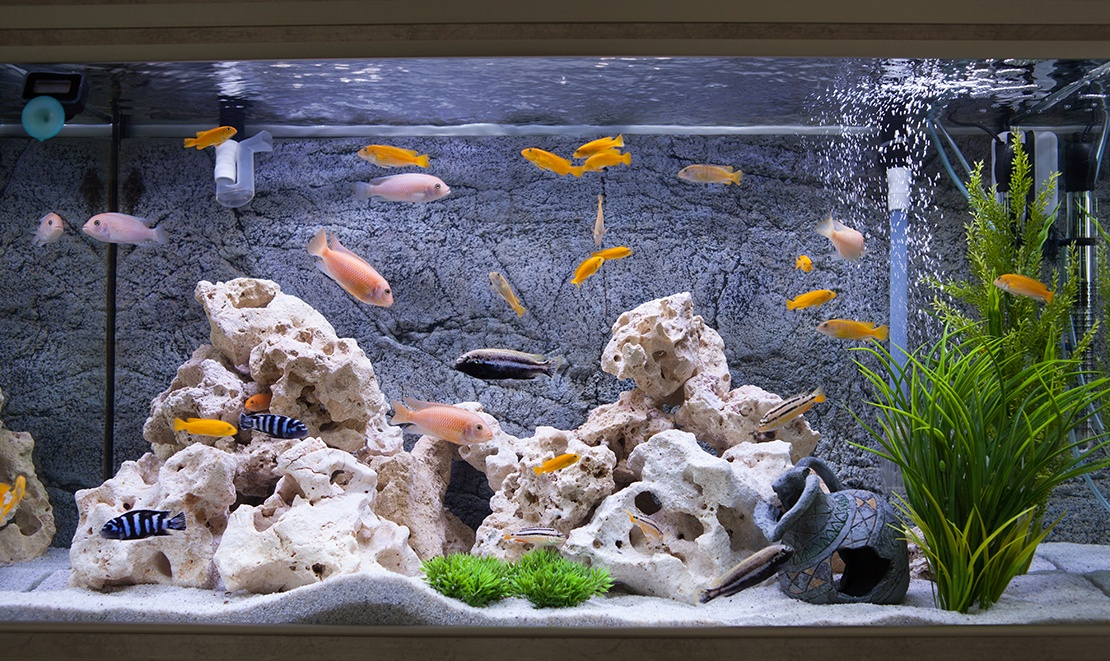 reverse osmosis water for fish tank
