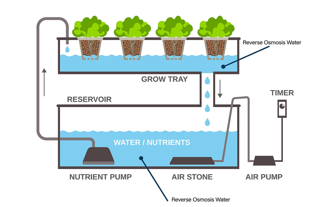illustration of a hydroponic garden